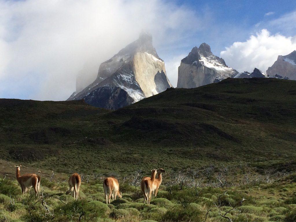 IMG 2173 1024x768 - Best of Chile ist Qual der Wahl und Flamingo extra