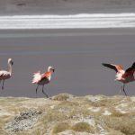 IMG 2266 150x150 - Best of Chile ist Qual der Wahl und Flamingo extra