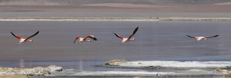 Best of Chile ist Qual der Wahl und Flamingo extra