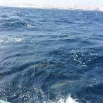 IMG 7701 150x150 - Schönes Küstensegeln