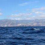 IMG 7738 150x150 - Wale und Wind auf den Kanaren