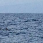 IMG 7765 150x150 - Wale und Wind auf den Kanaren