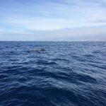 IMG 7827 150x150 - Wale und Wind auf den Kanaren